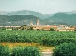 Binissalem, Mallorca, Balearic Islands, Spain.